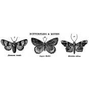 Tim Holtz Wood Mounted Stamp - Butterflies & Moths 2 J3-1672