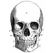 Tim Holtz Wood Mounted Stamp - Skull P4-1964