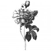 Tim Holtz Wood Mounted Stamp: Halftone Flower 2 U1-3436